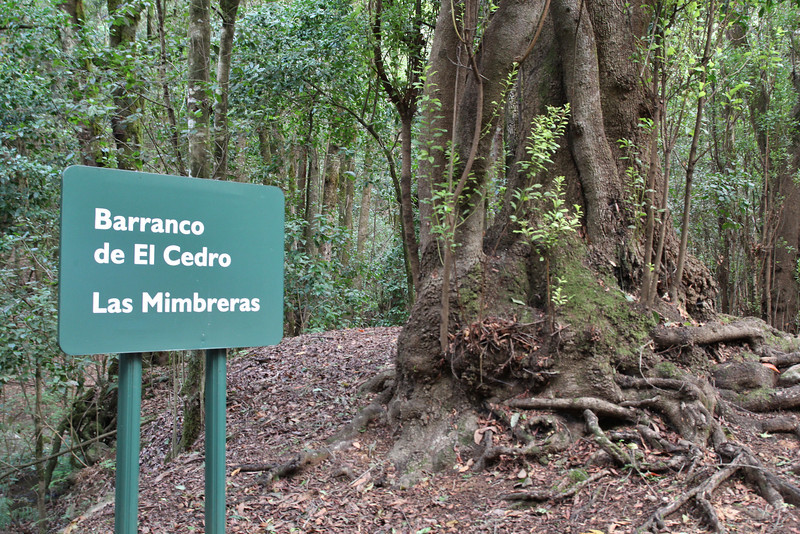 El Cedro 900m (before Barranco de Elcedro, Las Mimbreras )