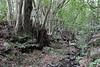 Spring, Primeval forest with 'Arboretum' Red de Equipamientos, 'Meriga' (nabij Los Aceyinos)