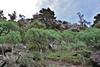 Euphorbia  or E. bravoana (red seed pots) , Palo Atravesado 600m, 4x4 road NE of Enchereda 1065m