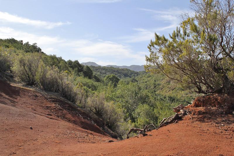 Laurel woodland, Parque Nacional de Garajonay