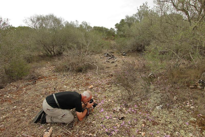 Colchicum filifolium, syn. Merendera filifolia, Song Gual ca 100m near MA15