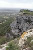 Lavatera maritima growing on limestone rocks, Puig de Randa 542m, NE of Llucmajor