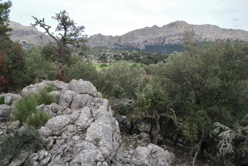 Recreation Area Memut 2, 500m E of Memut Binifaldo, Serra de Tramuntana, ca 1000m.