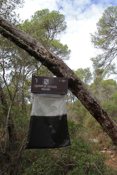 Trap for the processionary caterpillar in Parque Natural Mondragó