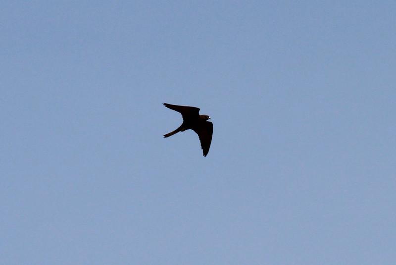 near Cap Llebeitx, dark form, Island, Parc Naturel de sa Dragonera