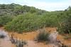 Pistachia lentiscus, Parque Natural Mondragó