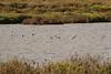 Himantopus himantopus, (NL:Steltkluut), Salobrar de Campo (MA6040)