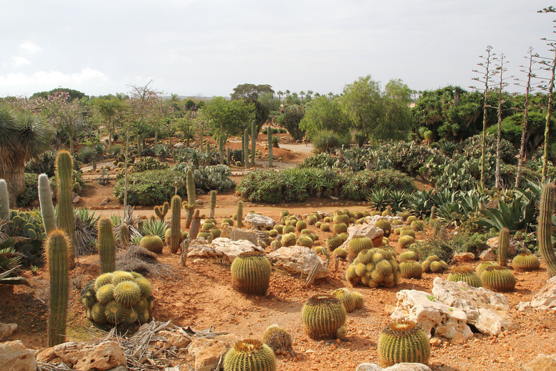 Garden Botanicactus, E of Ses Salines,  Photos of this Botanic garden see gallery:  ROCK GARDEN / OTHER GARDENS on this site.