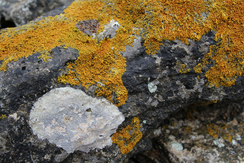 Xanthoria parietina (NL: Groot dooiermos) (orange-yellow) + Aspicilia cf calcarea (NL: Plat dambordje) (white) + Verrucaria cf erichsenii (NL: Gewone zeestippelkorst) (black), North of Cap de ses Salines, Determination lichens by Kok van Herk