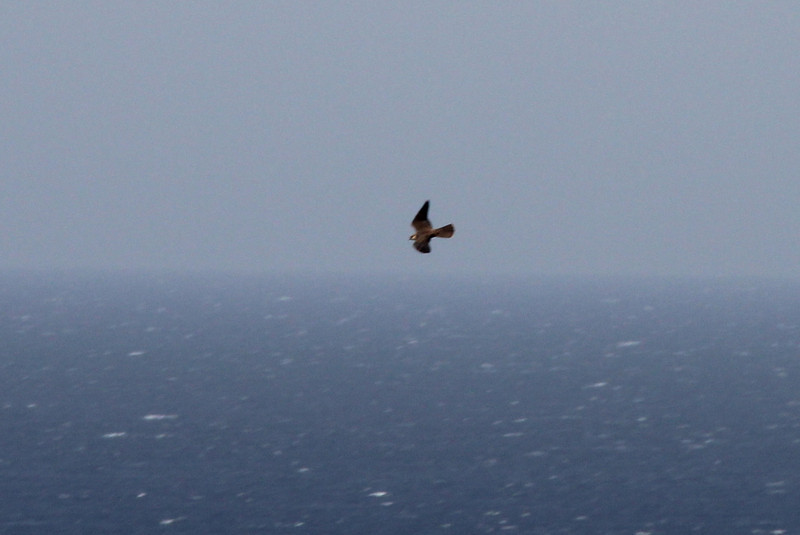 near Cap Llebeitx, Island, Parc Naturel de sa Dragonera