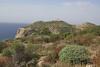 Euphorbia dendroides, Island, Parc Naturel de sa Dragonera, Liedó-des Liebeig
