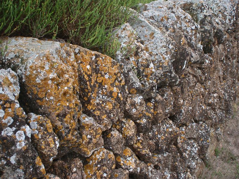 Lichen at old Majorcas walls, Salobrar de Campo