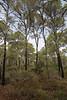 Pinus brutia ssp. halepensis, Parque Natural Mondragó