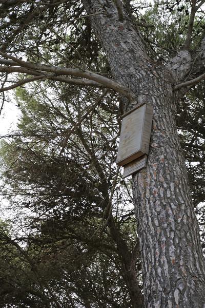 Batbox, Parque Natural de s'Albufera de Mallorca