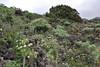 Succulents, S of Funcaliente