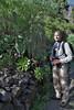 Aeonium calderense, flower stem > 100cm. Barranco de las Angustias, route PR LP 13.1 in the South of Parque Nacional de la Caldera de Taburiente