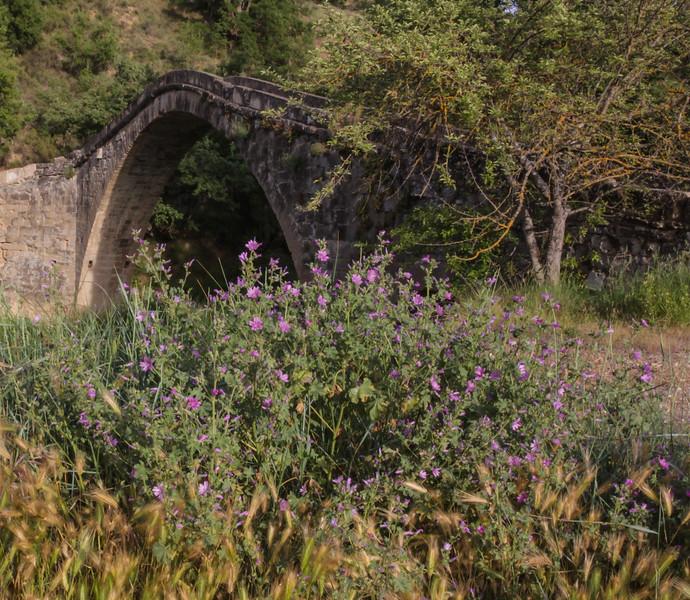 Malva sylvestris and Puente de Campanachal