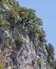 Quercus spec.