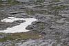 melting snow habitat