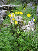 habitat with Ranunculus spec. and Scilla hispanica (syn. Endymion hispanica)
