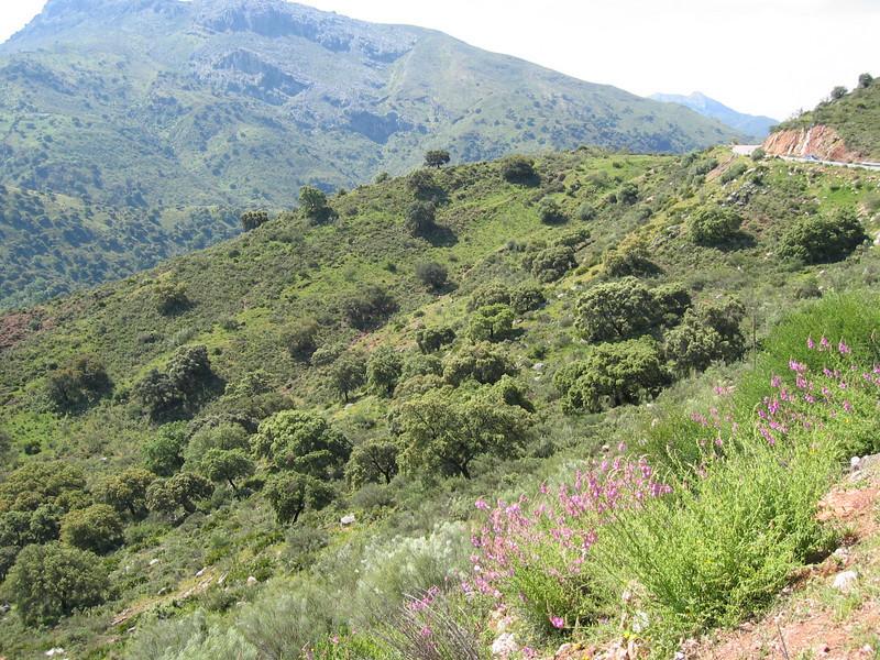 habitat of Antirrhinum majus ssp. linkianum (South Spain)