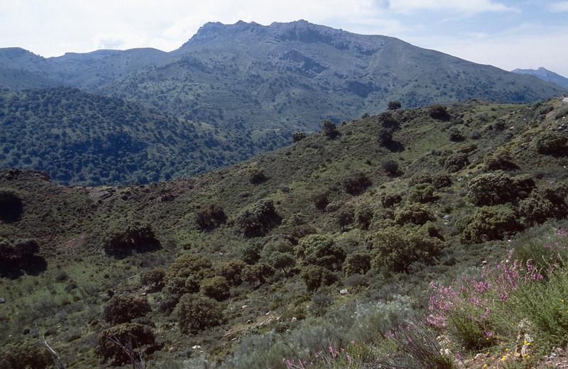 Antirrhinum majus ssp. linkianum, habitat