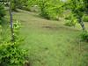 habitat Orchis langei