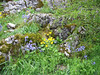 habitat with Ranunculus spec. and Scilla hispanica (syn. Endymion hispanica)
