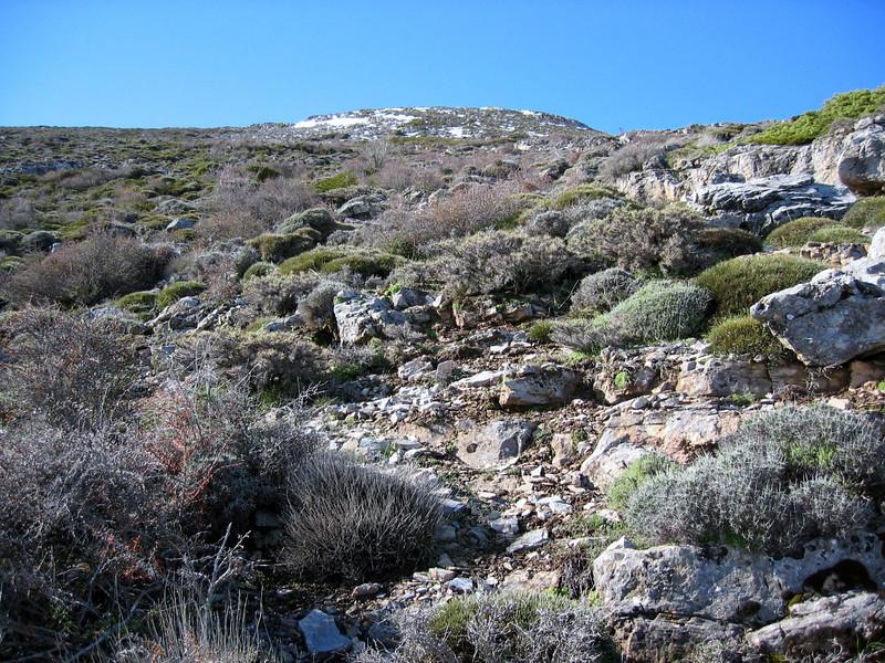 habitat of Erinacaea anthyllis (>2000m Sierra Nevada)