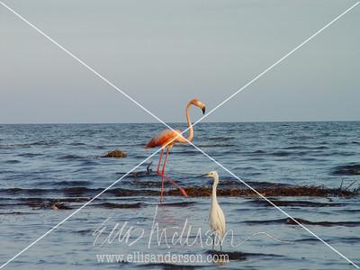 flamingo and heron