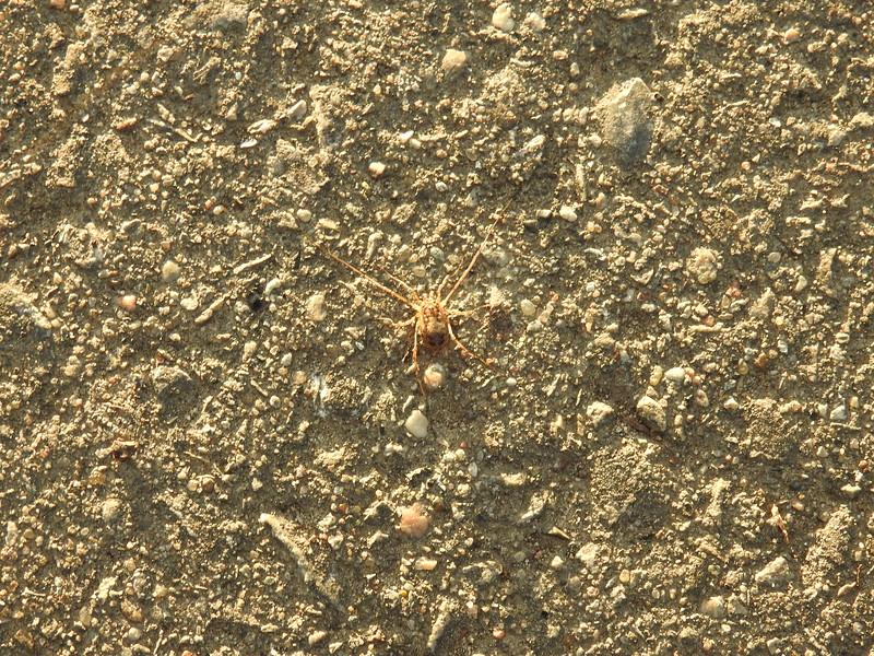 Arachnid (identify ??)