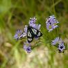 Butterfly ??