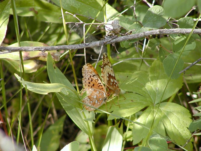 Different butterflies