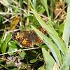 Butterfluy