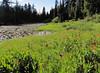 Wildflower meadows near Lake Bigelow (Bigelow Lakes Trail, Oregon Caves National Monument)