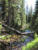 Creek (Wildflower Trail, Castle Crest Wildflower Garden, Crater Lake National Park, Oregon)