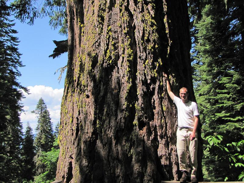 "Kees Jan near the trunk of ""the big tree"", Pseudotsuga menziesii (Big Tree Trail, Oregon Caves National Monument)"
