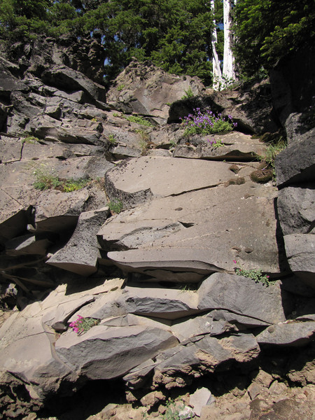 habitat of Penstemon cf. rupicola x davidsonii and Penstemon rupicola, Rock Penstemon (along road to Cloud Cap Campground, Mount Hood)