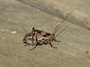 Grasshopper, Lost Creek Campsite in Crater Lake National Park
