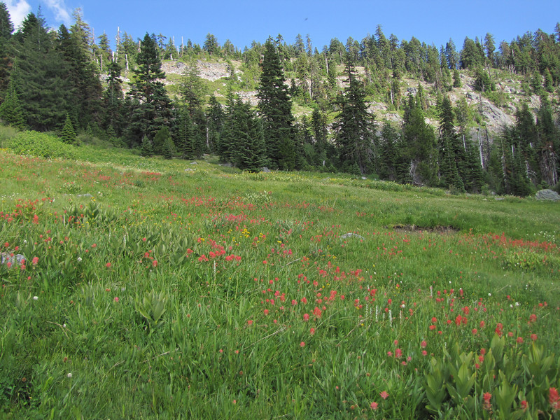 meadows near Lake Bigelow  (Bigelow Lakes Trail, Oregon Caves National Monument)