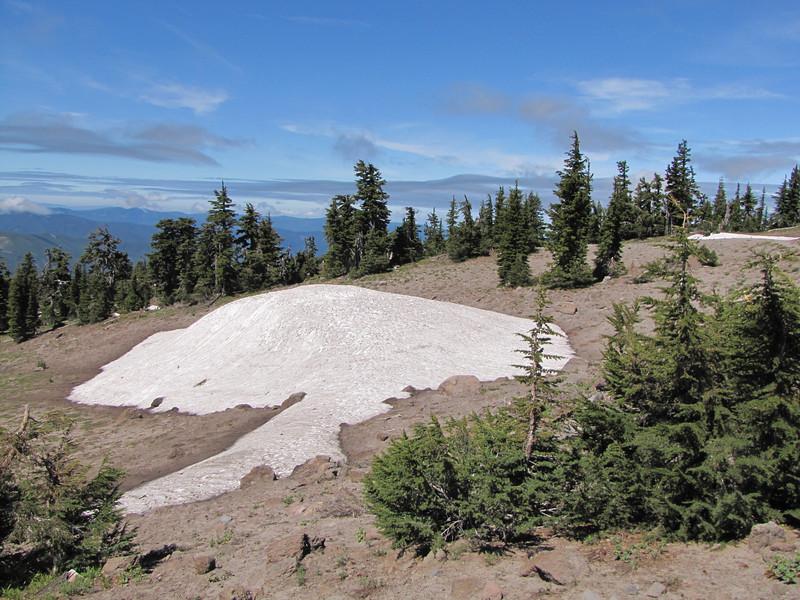 Tsuga mertensiana, Treeline (Mountaineer Trail, Mount Hood, Oregon)