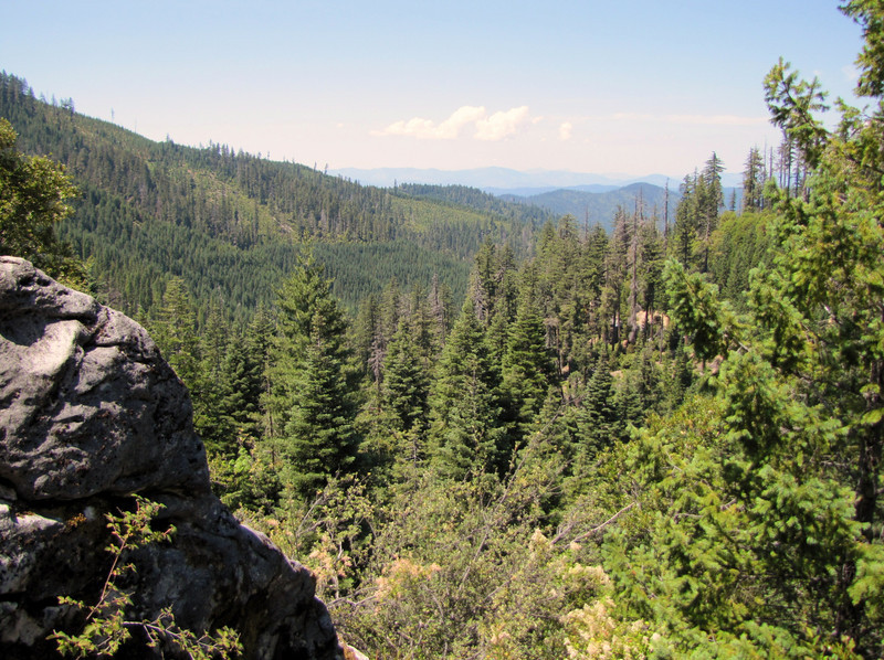 Oregon Caves National Monument, Big tree trail