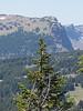 Abies amabilis, A. concolor var. lowiana, Abies grandis or Abies lasiocarpa var. lasiocarpa (Mount Scot, Crater Lake National Park, Oregon)