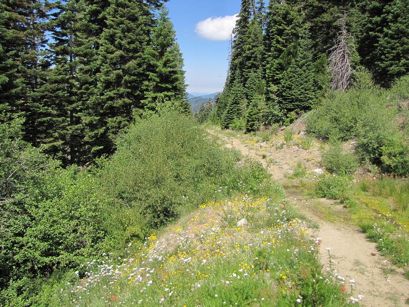 butterfly habitat (Trailhead Bigelow Lakes, Oregon Caves National Monument)