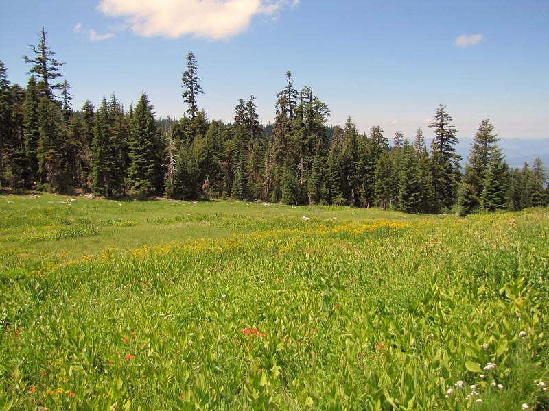 Castilleja miniata? (Bigelow Lakes Trail, Oregon Caves National Monument)