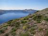 pumice habitat, Cloud Cap 2427m (Crater Lake National Park, Oregon)