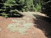 Eriogonum spec (between Bigelow Lake and  Mount Elijah 1929m, Oregon Caves National Monument)