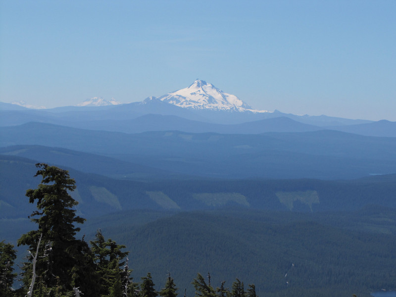 Tsuga mertensiana, in the background South, left the Three Sisters and in the middle, Mt. Jefferson 3199m, Washington