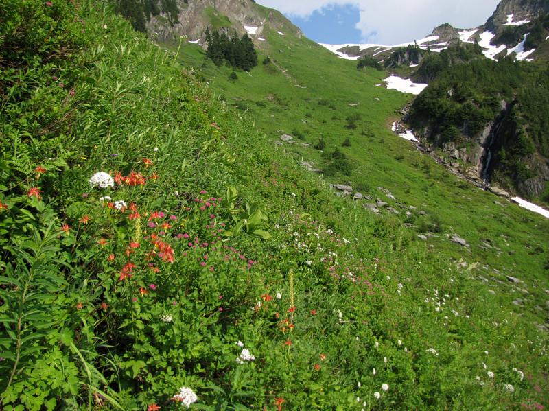 Aquilegia formosa (between Hidden Lake Trailhead and Hidden Lake, North Cascades National Park, Washington)