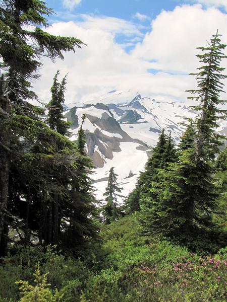 View towards Mount Baker 3286m from Ptarmigan Trail, Washington